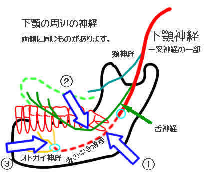 下顎の周辺の神経